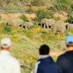 Sanbona Wildlife Reserve – Our tip for discerning Incentive Groups!