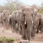 Our tip for a superb safari experience: Mashatu & Mala Mala Wildlife Package
