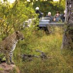 Benefit with your next trip to Southern Africa from current offers: