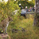 Profitieren Sie bei Ihrer nächsten Reise ins Südliche Afrika von aktuellen Angeboten: