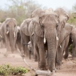 Is travel to Botswana or Tanzania possible again?